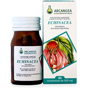 Echinacea Arcangea