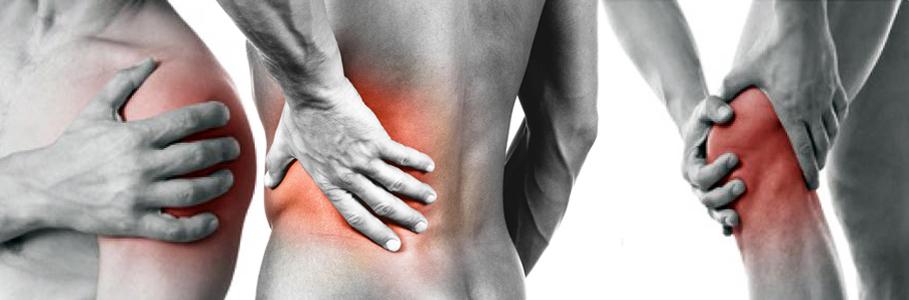 Ossa-Muscoli-Articolazioni