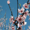 Aprile: la rinascita